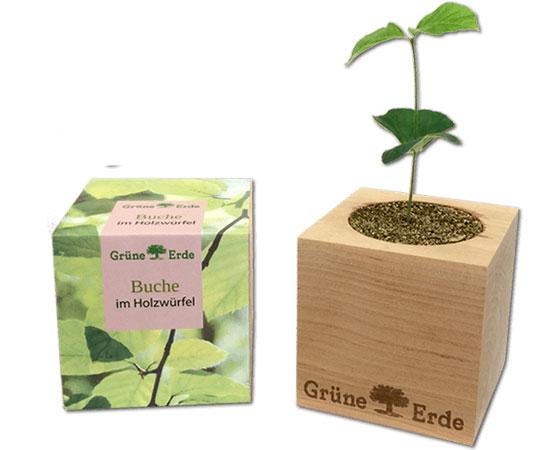 plante-bureau-aromatique-cadeau-affaires-vip-3